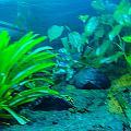 Aquariums by Tinjoe Mbugus