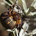 Arachnophobia by Ted Raynor