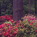 Around A Tree by Svetlana Sewell