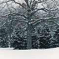 As The Snow Flies by Rachel Cohen