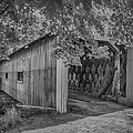 Ashtabula Collection - South Denmark Road Covered Bridge  7k0201 by Guy Whiteley