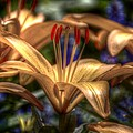 Asiatic Lily by Robert Nelson