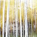 Aspen by Lelia DeMello