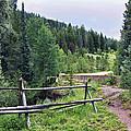 Aspen Trees In Vail - Colorado by Madeline Ellis