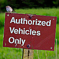 Authorized Vehicles Only by Athena Mckinzie