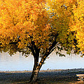 Autumn At The River by Athena Mckinzie