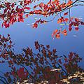 Autumn Blaze by Bruce Thompson