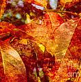 Autumn Bright by Arlene Carmel