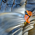 Autumn Color Caught In Time by John Magyar Photography