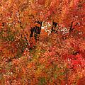 Autumn Colors by CE Haynes