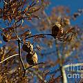 Autumn Coniferous by Mats Silvan