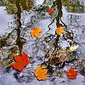 Autumn by Daniel Janda