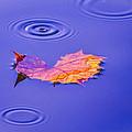 Autumn Drops by Brian Stevens