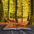 Autumn Fall Forest Landscape Magic Book Pages by Matthew Gibson