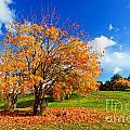 Autumn Fall Landscape by Michal Bednarek