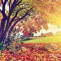 Autumn Fall Park by Michal Bednarek