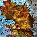 Autumn Fantasy by Vladimir Kholostykh
