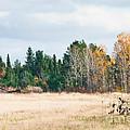 Autumn Field by Cheryl Baxter
