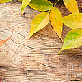 Autumn Forest Background by Mythja  Photography