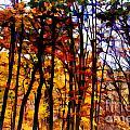 Autumn Forest by Douglas Barnard
