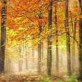 Autumn Gold by Ian Hufton