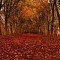 Autumn II by Raymond Salani III