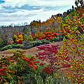 Autumn In Full Bloom by Frozen in Time Fine Art Photography
