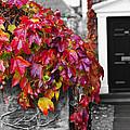Autumn Ivy by Hal Halli