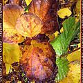 Autumn Leaves 2 by Helene U Taylor