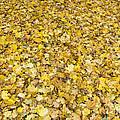 Autumn Leaves by Michal Boubin