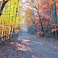 Autumn On Forbidden Drive by Bill Cannon