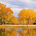 Autumn Orange by Marilyn Diaz