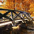 Autumn Park by Michal Bednarek