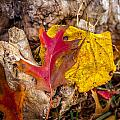 Autumn Pile by Melinda Ledsome