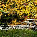 Autumn Pond 2013 by Bill Wakeley