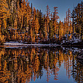 Autumn Reflected by Mike Reid