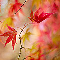 Autumn Reverie by Jacky Parker