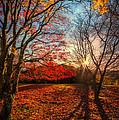 Autumn Shadows by Adrian Evans