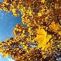 Autumn Splendor 9 by Will Borden