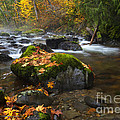 Autumn Stream by Mike Dawson