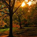 Autumn Sunset by Dan Sproul