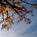 Autumn by TouTouke A Y