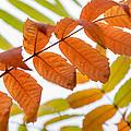 Autumn Upshot by Bill Pevlor