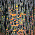 Autumn's Last Stand by Bill Wakeley