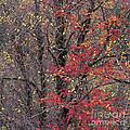 Autumn's Palette by Alan L Graham