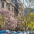 Back Bay Brownstones by Susan Cole Kelly