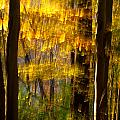 Backlit Leaves Abstract by Kenneth Sponsler