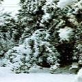 Backyard Snow by Elaine Williams