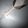 Bacteriophage by Science Picture Co