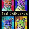 Bad Chihuahua  by Sara Newton